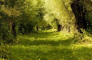 biesbosch natuur foto